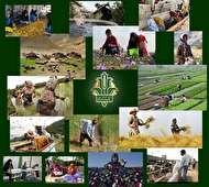 اقدام جدید بانک کشاورزی برای نمایش عملکرد روزانه بانک در توسعه اشتغال پایدار روستایی و عشایری