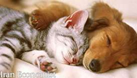 (ویدیو) نوازش سگ بیمار توسط گربه مهربان