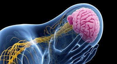 قرص گیاهی که به جای شفا جان می گیرد/ آسیب مغزی با مصرف داروی درمان صرع و تقویت حافظه