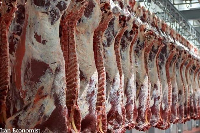در گفت و گو با باشگاه خبرنگاران جوان مطرح شد؛زنگ خطر تولید گوشت در کشور به صدا در آمد/کمبود علوفه، قیمت تمام شده تولید گوشت را بالا برد